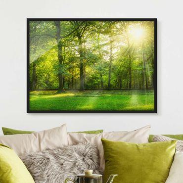 Bild mit Rahmen - Spaziergang im Wald - Querformat