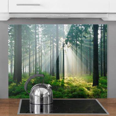 Spritzschutz Glas - Enlightened Forest - Quer 4:3
