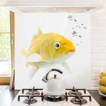 Spritzschutz Glas - Goldfisch Gelb - Quadrat 1:1