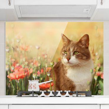 Spritzschutz Glas - Katze im Mohnfeld - Quer 4:3