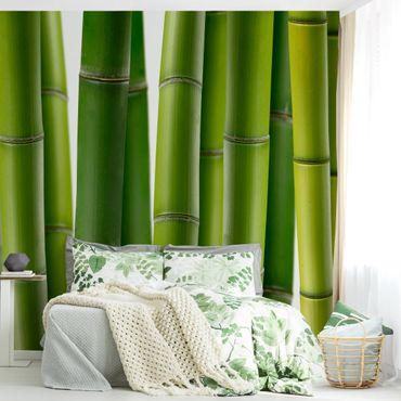 Fototapete Bambuspflanzen