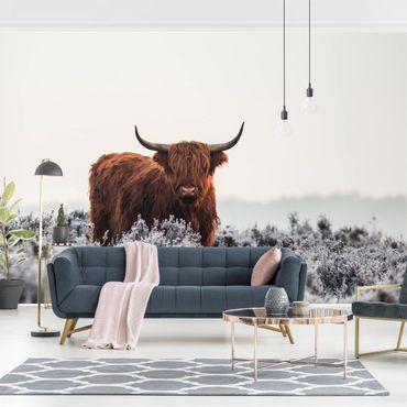 Fototapete - Bison in den Highlands