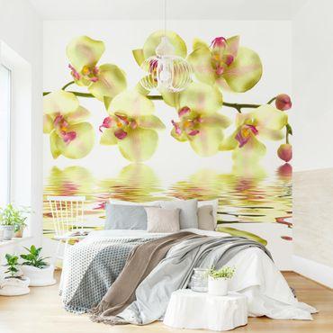 Fototapete Dreamy Orchid Waters