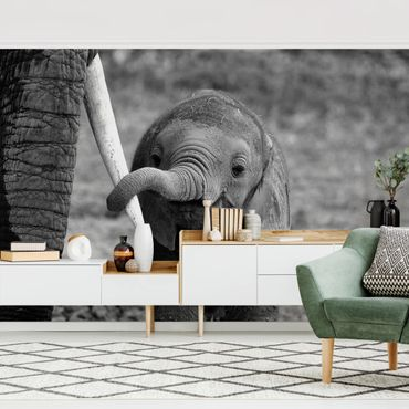 Fototapete Elefantenbaby