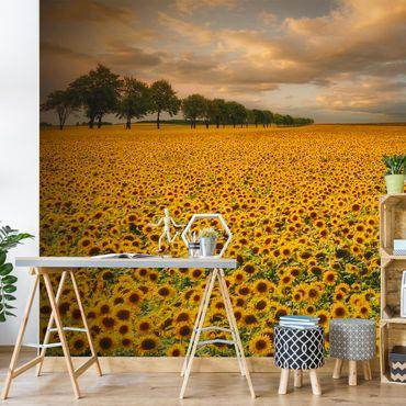 Fototapete Feld mit Sonnenblumen