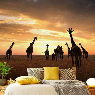 Fototapete Giraffen Familie