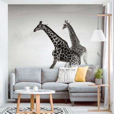 Fototapete Giraffenjagd