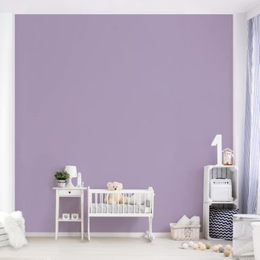 Fototapete - Lavendel