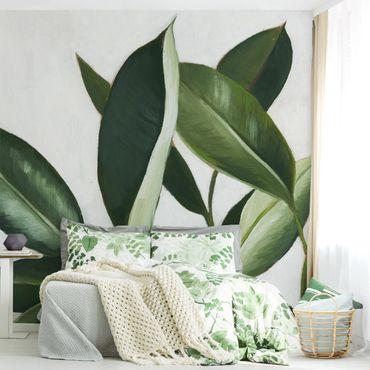 Fototapete - Lieblingspflanzen - Gummibaum