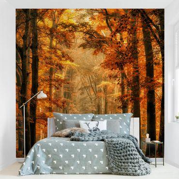 Fototapete Märchenwald im Herbst
