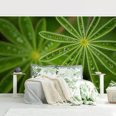 Fototapete - Morgentau auf Lupinenblättern
