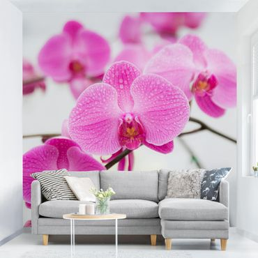 Fototapete Nahaufnahme Orchidee