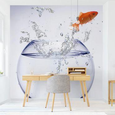 Fototapete One Flying Goldfish