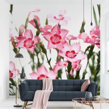 Fototapete Pink Flowers