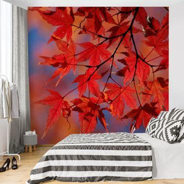 Fototapete Red Maple