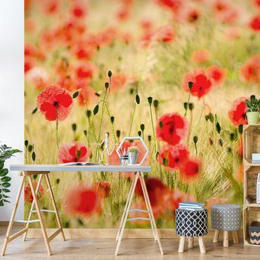 Fototapete Summer Poppies