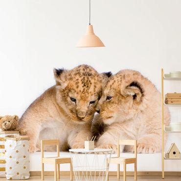 Fototapete Two Lion Babys