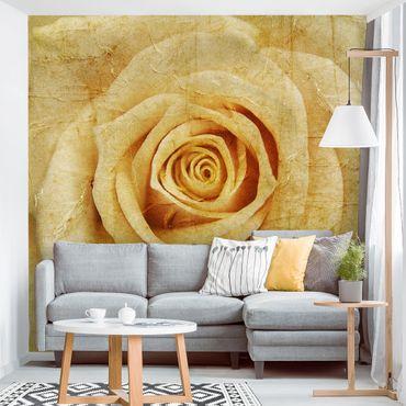 Fototapete Vintage Rose