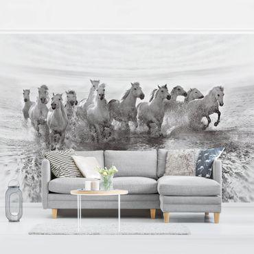 Fototapete Weiße Pferde im Meer