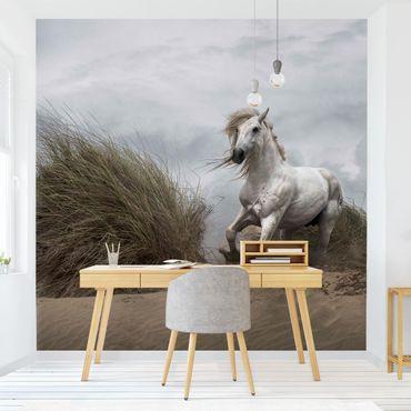 Fototapete Weißes Pferd in den Dünen