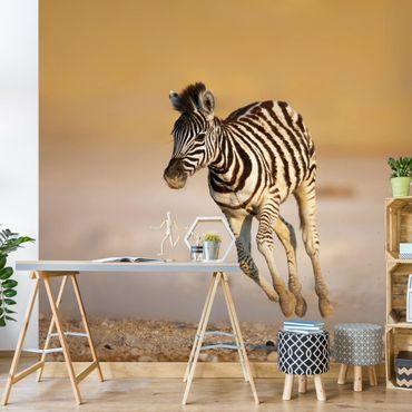 Fototapete Zebrafohlen