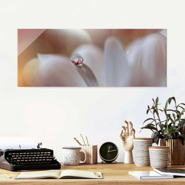 Glasbild - Tautropfen auf rosa Blüte - Panorama