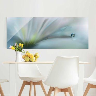 Glasbild - Tautropfen auf weißer Blüte - Panorama