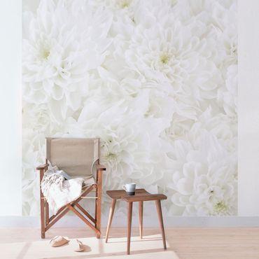 Fototapete Dahlien Blumenmeer weiß