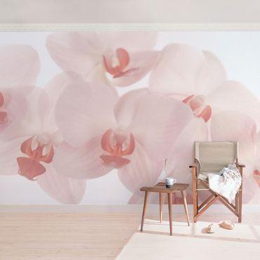 Fototapete Svelte Orchids