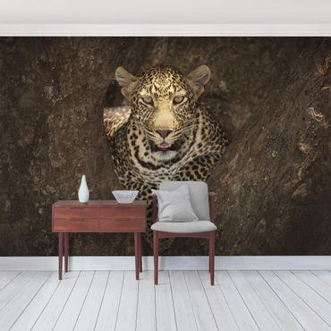 Fototapete Leopard ruht auf einem Baum
