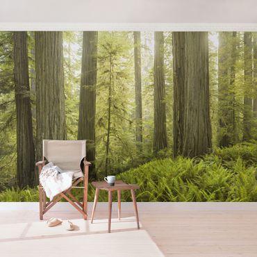 Fototapete Redwood State Park Waldblick