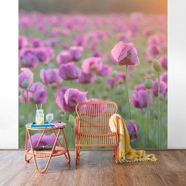 Fototapete Violette Schlafmohn Blumenwiese im Frühling