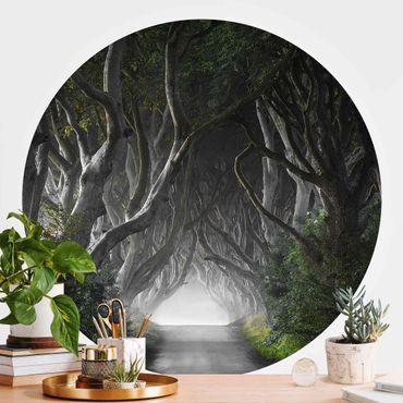 Runde Tapete selbstklebend - Wald in Nordirland