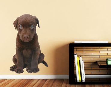 Wandtattoo Dunkler Labrador
