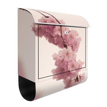 Briefkasten - Zartrosane Frühlingsblüte mit Bokeh