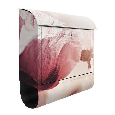 Briefkasten - Zartrosane Mohnblüte mit Wassertropfen