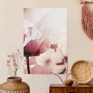 Glasbild - Zartrosane Mohnblüte mit Wassertropfen - Hochformat