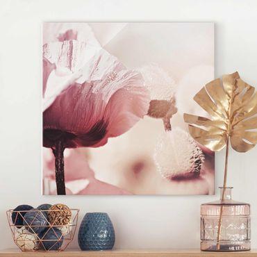 Glasbild - Zartrosane Mohnblüte mit Wassertropfen - Quadrat