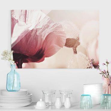 Glasbild - Zartrosane Mohnblüte mit Wassertropfen - Querformat