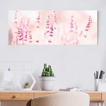 Glasbild - Zartrosaner Lavendel - Panorama