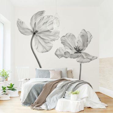 Fototapete - Zwei zarte weiße Tulpen