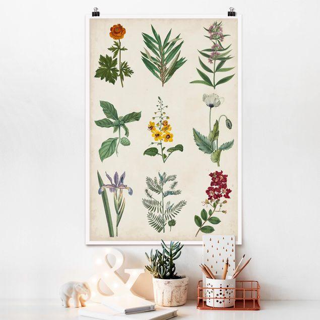 Poster - Botanische Schautafel II - Hochformat 3:2