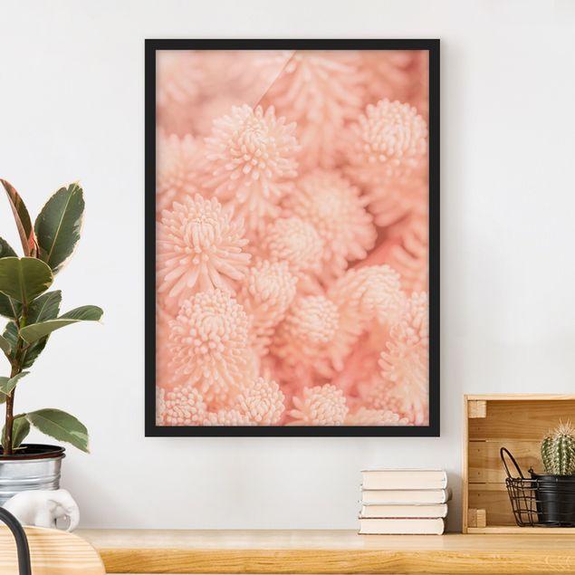 Bild mit Rahmen - Rosa Blütenzauber Sedum - Hochformat 3:4
