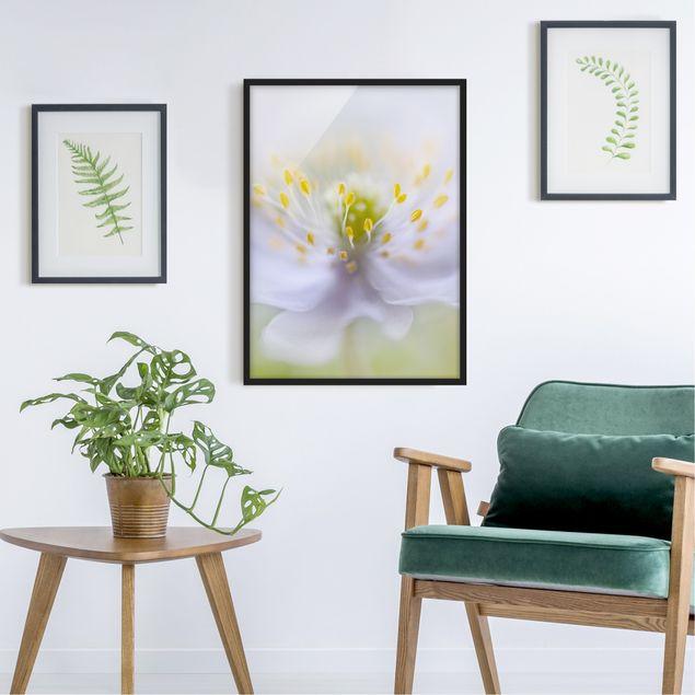 Bild mit Rahmen - Anemonen Schönheit - Hochformat 3:4