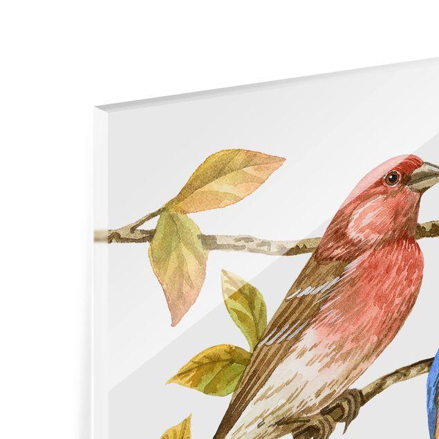 Glas Spritzschutz - Vögel und Beeren - Hüttensänger - Quadrat - 1:1