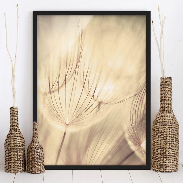 Bild mit Rahmen - Pusteblumen Nahaufnahme in wohnlicher Sepia Tönung - Hochformat 3:4