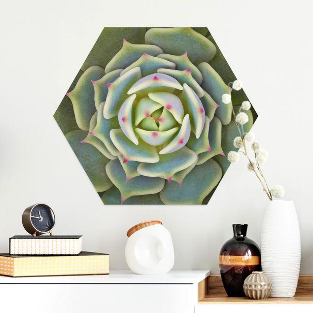 Hexagon Bild Alu-Dibond - Sukkulente - Echeveria Ben Badis