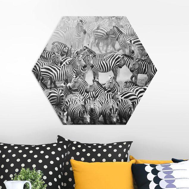 Hexagon Bild Forex - Zebraherde II