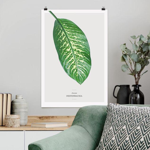 Poster - Tropisches Blatt Dieffenbachie - Hochformat 3:2