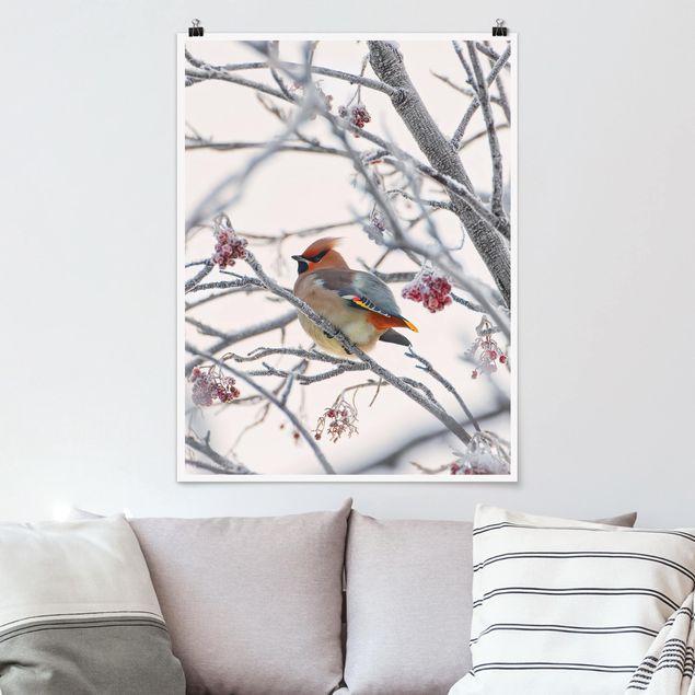 Poster - Seidenschwanz im Baum - Hochformat 3:4